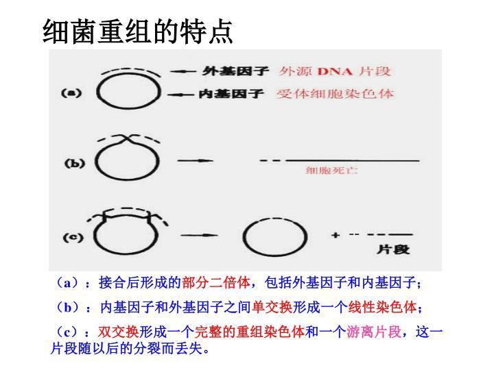 细菌重组的特点