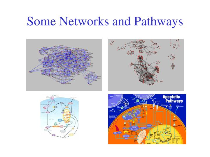 Some Networks and Pathways