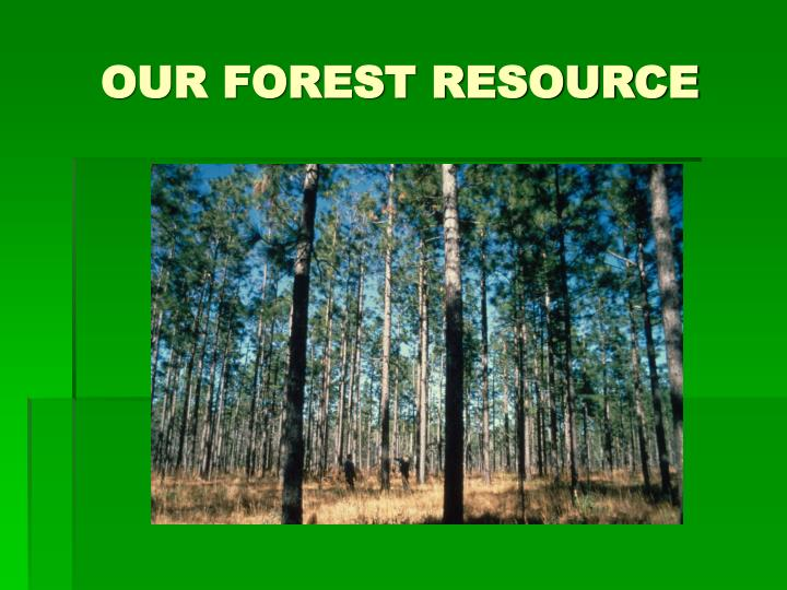 OUR FOREST RESOURCE