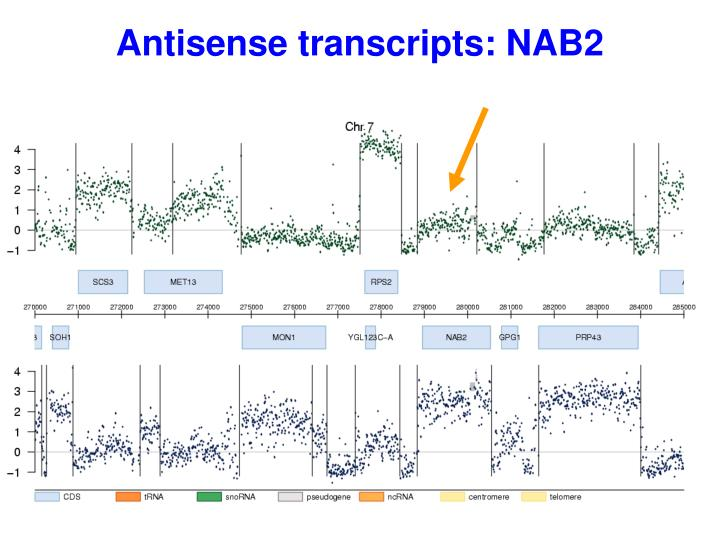 Antisense transcripts: NAB2