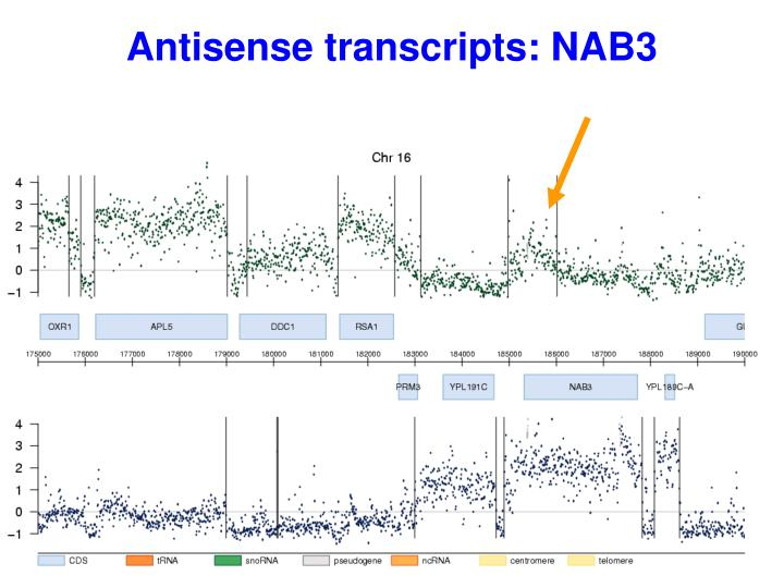 Antisense transcripts: NAB3