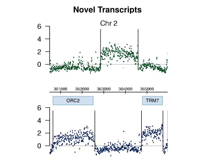 Novel Transcripts