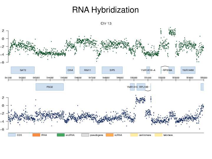 RNA Hybridization