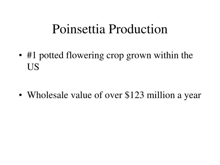 Poinsettia production