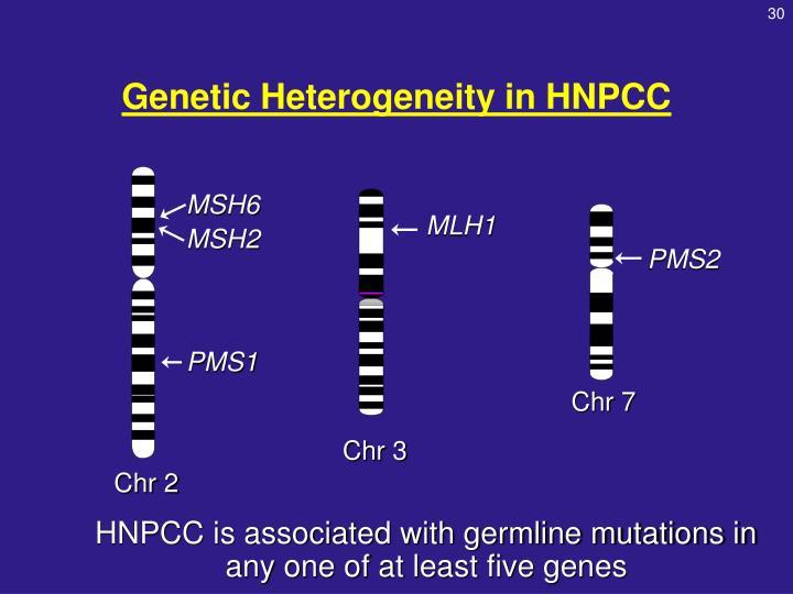 Genetic Heterogeneity in HNPCC