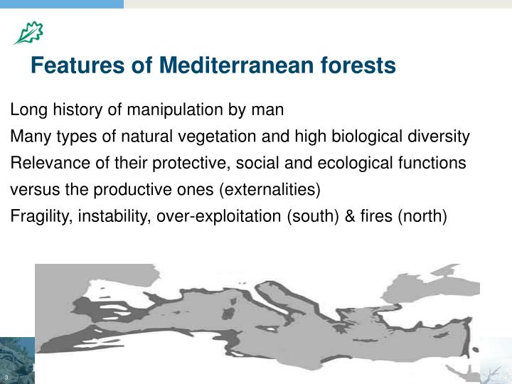 Features of mediterranean forests