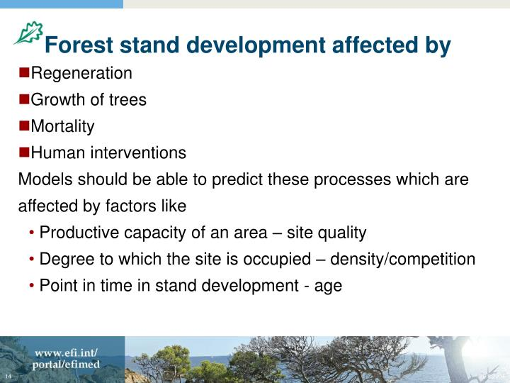 Forest stand development affected by