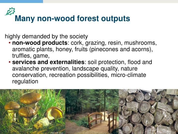 Many non-wood forest outputs