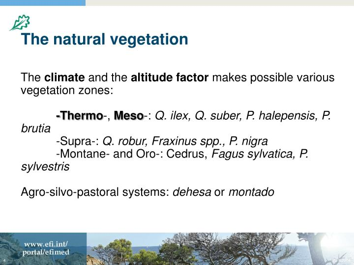 The natural vegetation