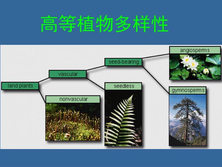 高等植物多样性