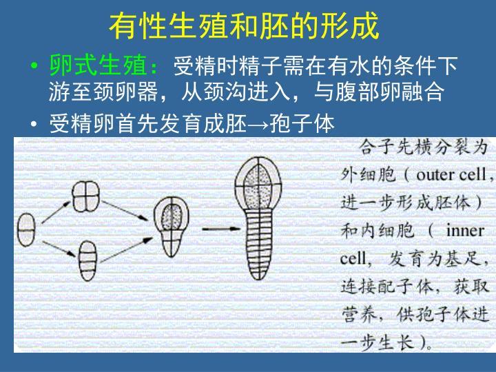 有性生殖和胚的形成