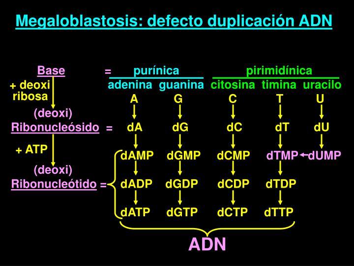 Megaloblastosis: defecto duplicación ADN