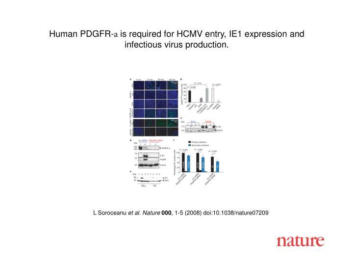 Human PDGFR-