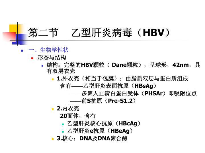 第二节    乙型肝炎病毒(