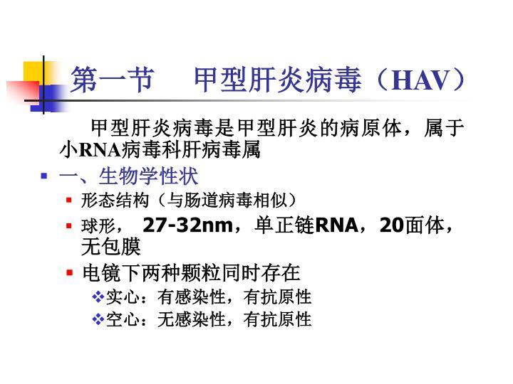 第一节     甲型肝炎病毒(