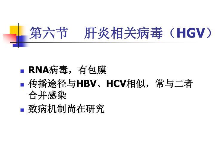 第六节    肝炎相关病毒(