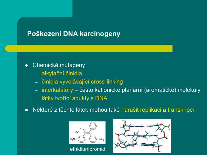 Poškození DNA karcinogeny