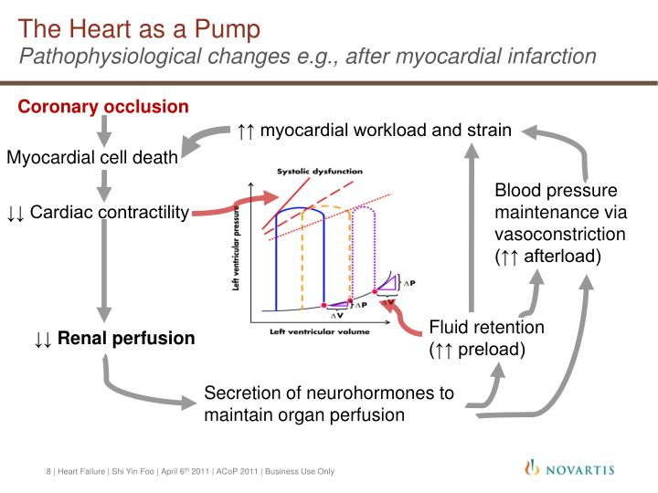 The Heart as a Pump