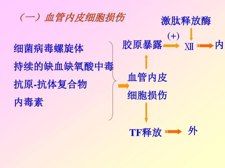 (一)血管内皮细胞损伤