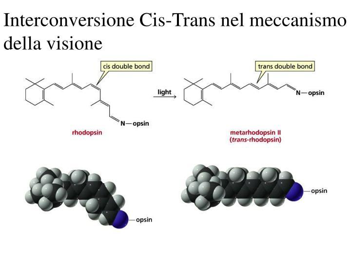 Interconversione Cis-Trans nel meccanismo della visione