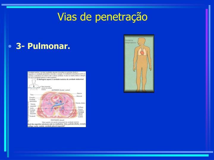 3- Pulmonar.