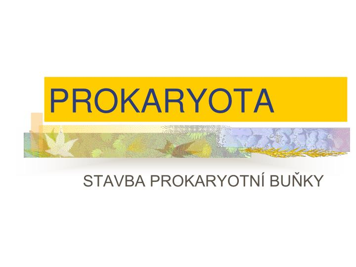 PROKARYOTA