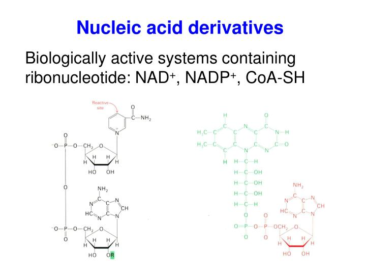 Nucleic acid derivatives