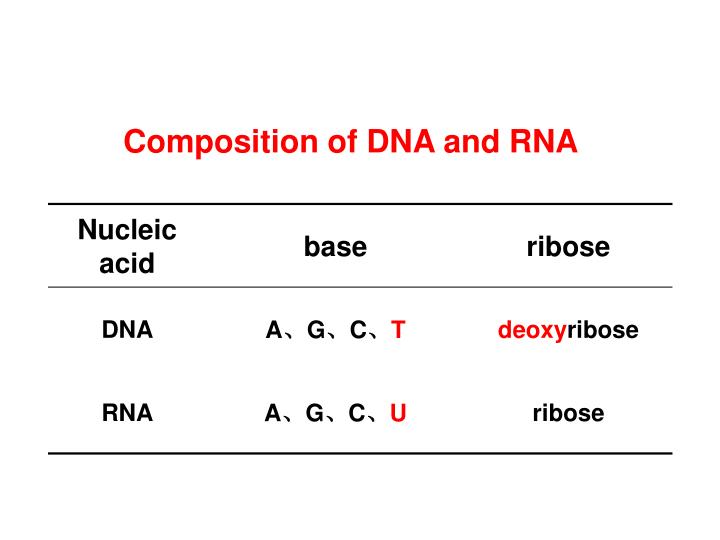 Composition of DNA and RNA