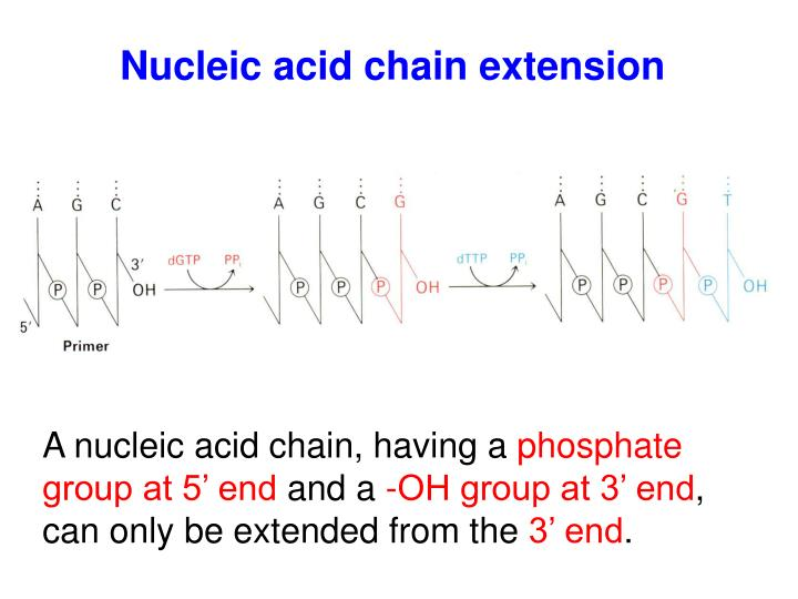 Nucleic acid chain extension