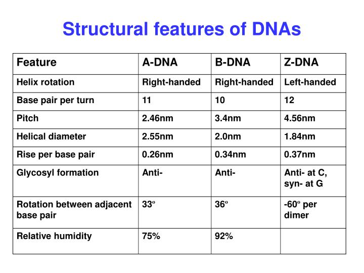 Structural features of DNAs