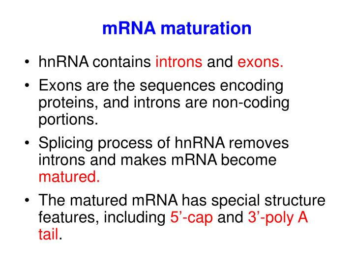 mRNA maturation