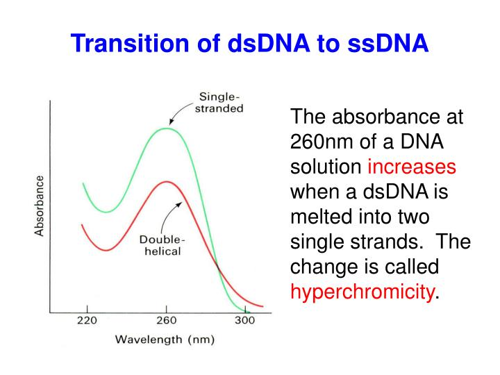 Transition of dsDNA to ssDNA