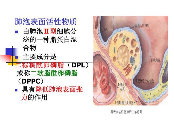 肺泡表面活性物质