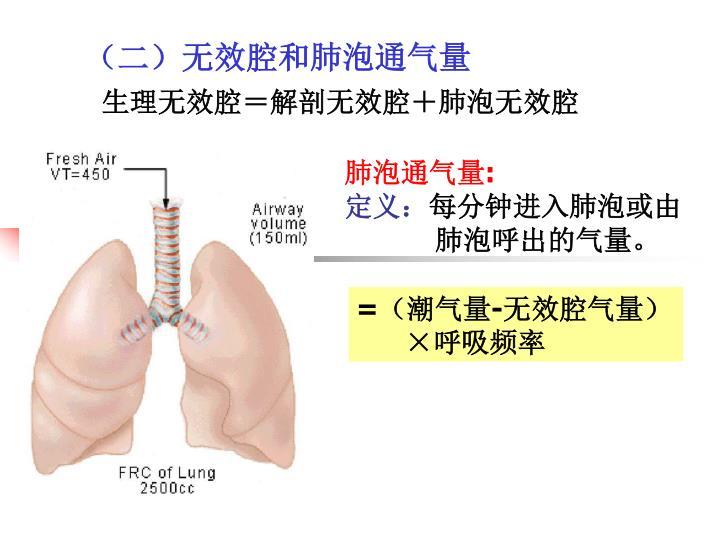 肺泡通气量