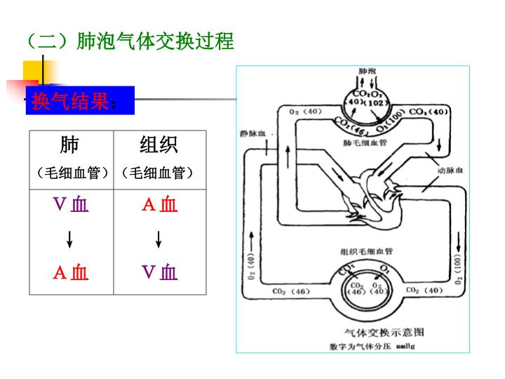 (二)肺泡气体交换过程