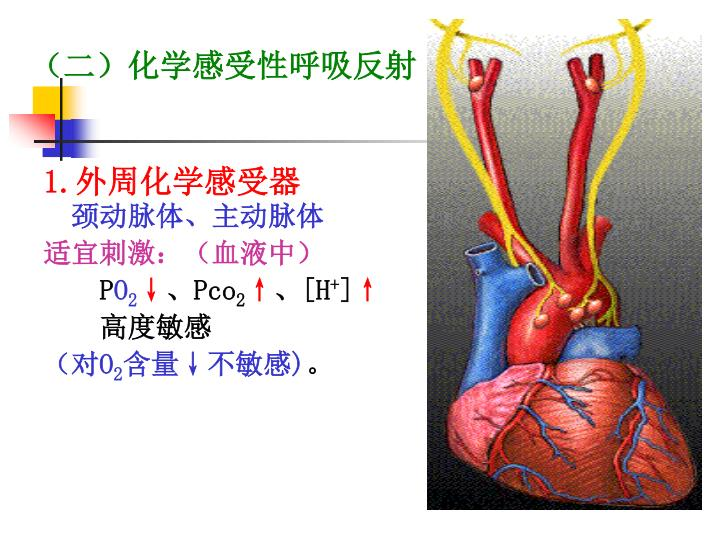 (二)化学感受性呼吸反射