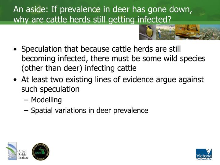 An aside: If prevalence in deer has gone down, why are cattle herds still getting infected?