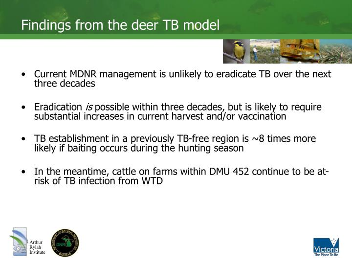 Findings from the deer tb model