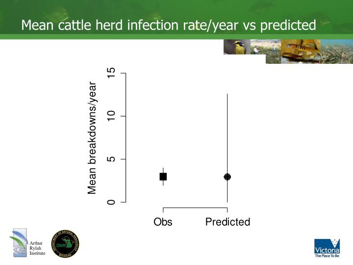 Mean cattle herd infection rate/year vs predicted