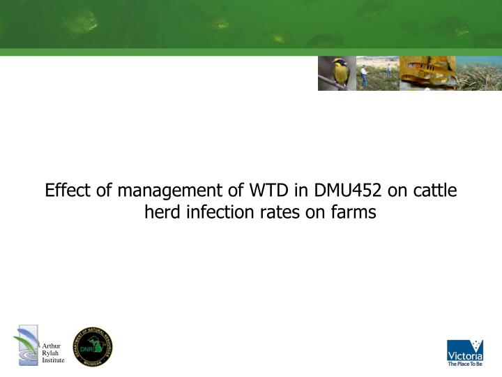 Effect of management of WTD in DMU452 on cattle herd infection rates on farms