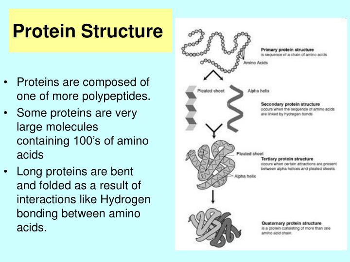 Proteins are composed of one of more polypeptides.