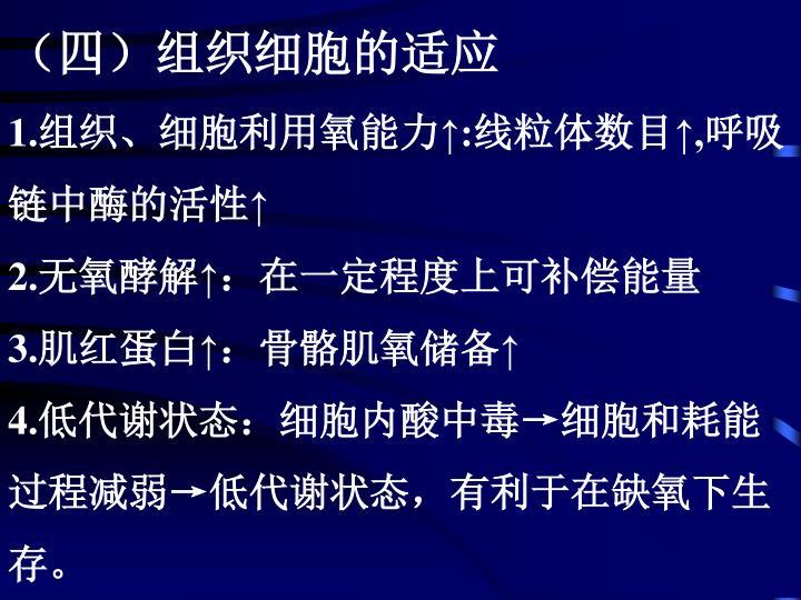 (四)组织细胞的适应