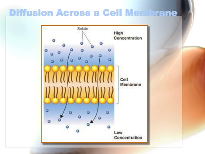 Diffusion Across a Cell Membrane
