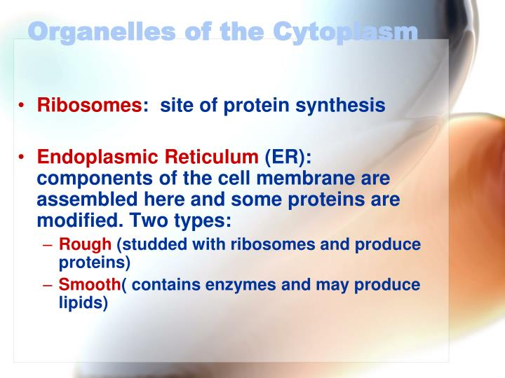 Organelles of the Cytoplasm