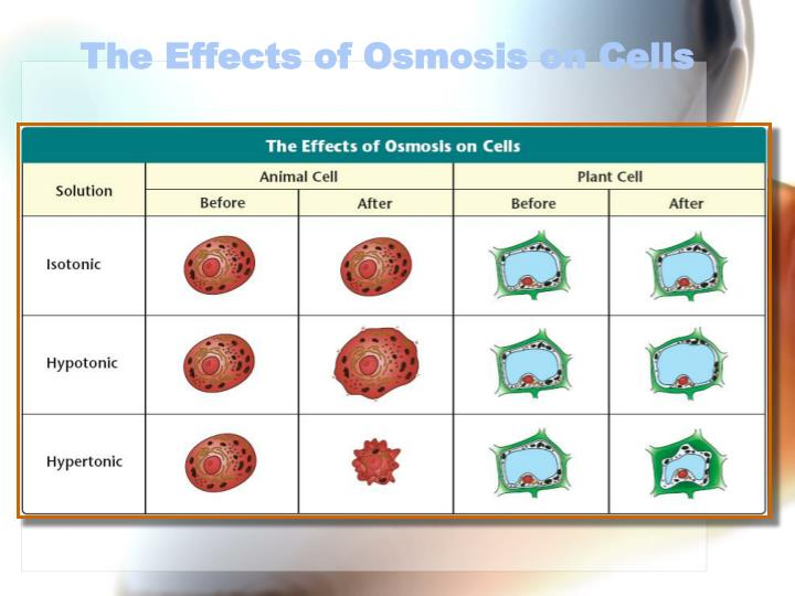 The Effects of Osmosis on Cells