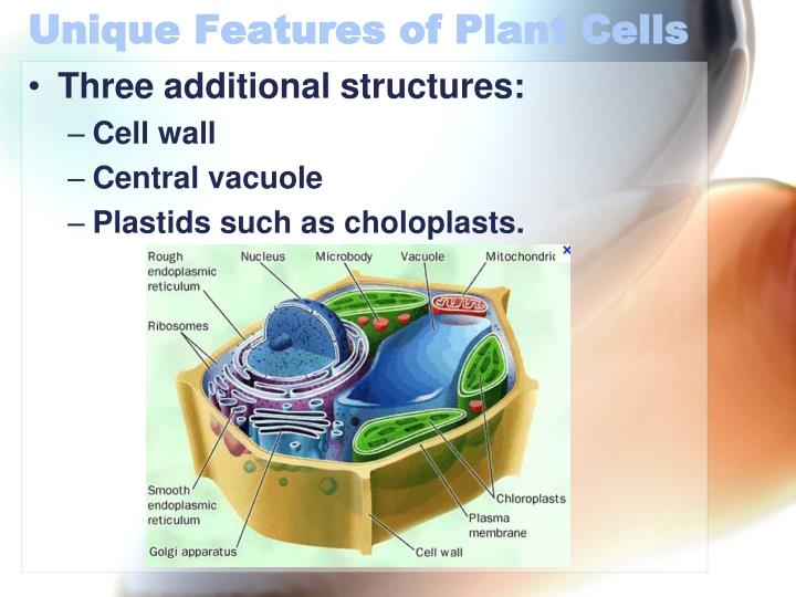 Unique Features of Plant Cells