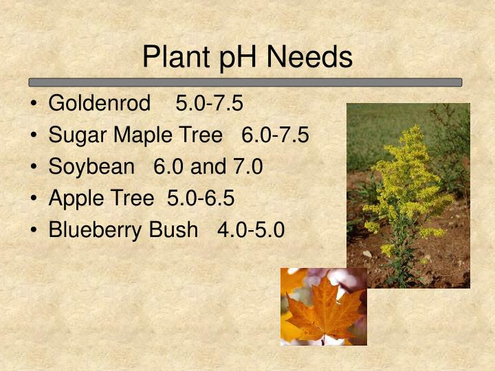 Plant pH Needs