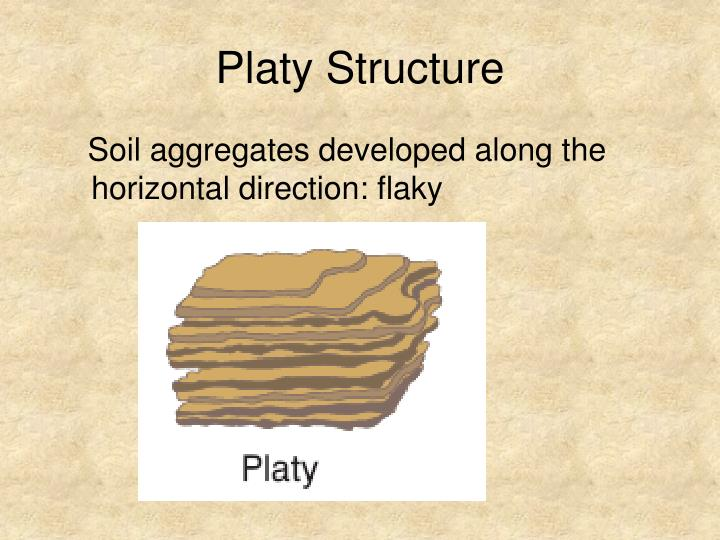 Platy Structure