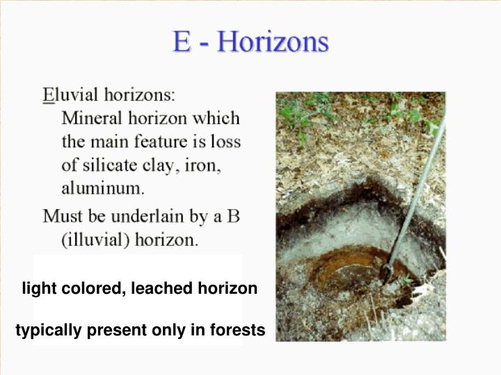 light colored, leached horizon