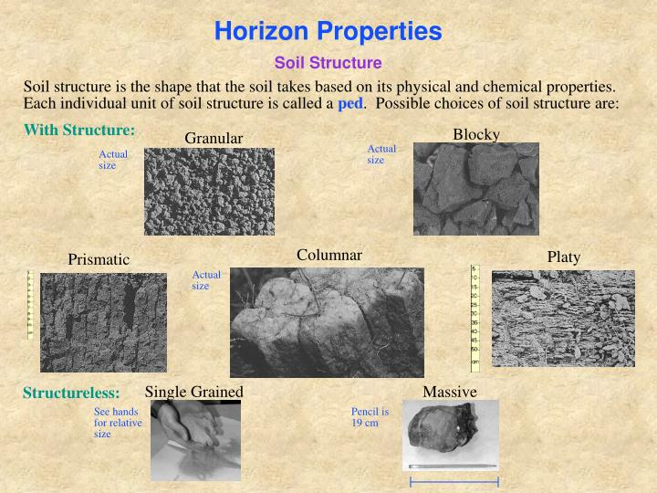 Horizon Properties